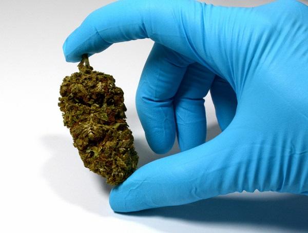 glove holding a ball of cannabis